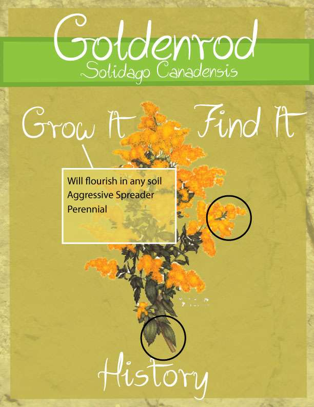 garden-app-design-page-3